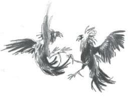 Het hanengevecht illustratie haantjes